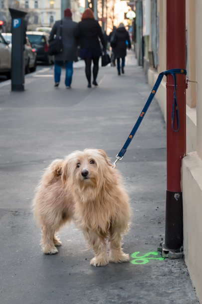 Dog-friendly city, Prague, Czech Republic | Barbara Cameron | Food & Travel Photographer