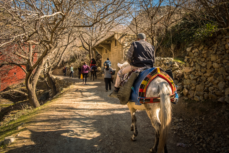 Berber Man on a Mule, Ourika Valley, Morocco   Barbara Cameron Pix   Food & Travel Photographer