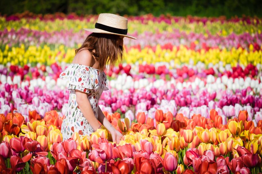 Tulip Festival in Abbotsford | Barbara Cameron Pix | Pro Photographer