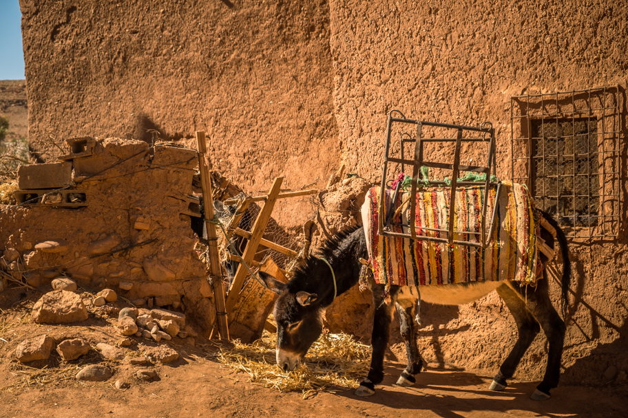 Donkey at Ait Ben Haddou, Ouarzazate Province, Morocco| Barbara Cameron Pix | Food & Travel Photographer