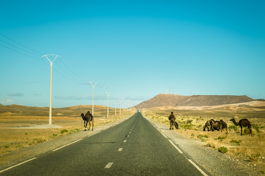 Camels cross the highway in the Sahara Desert, Morocco| Barbara Cameron Pix | Food & Travel Photographer