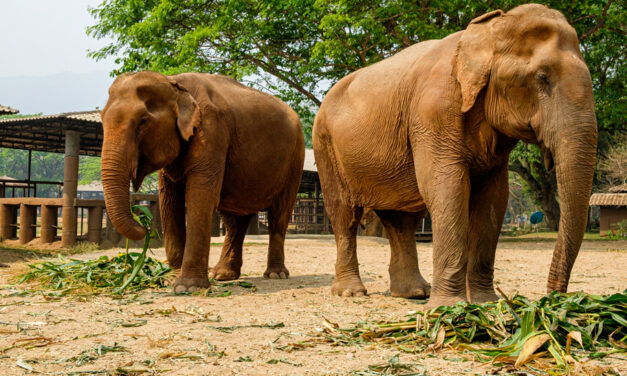 Why Choose an Ethical Elephant Sanctuary in Thailand