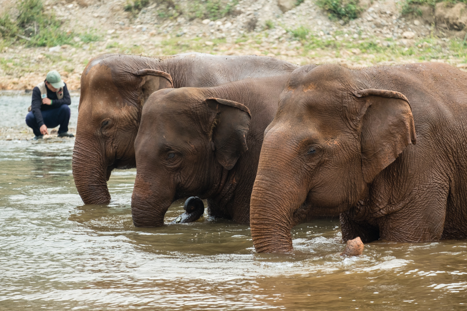 Three elephants bathing and drinking in the river| Barbara Cameron Pix | Food & Travel Photographer