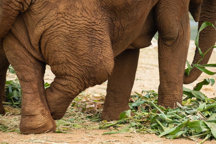 An elephant with a broken leg| Barbara Cameron Pix | Food & Travel Photographer