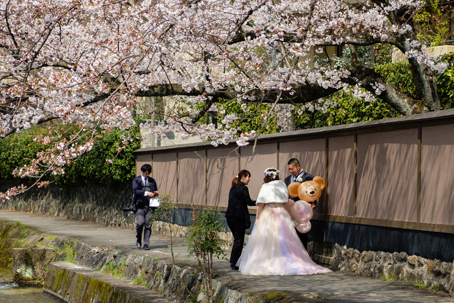 Wedding photos under cherry blossom tree in Japan| Barbara Cameron Pix | Food & Travel Photographer
