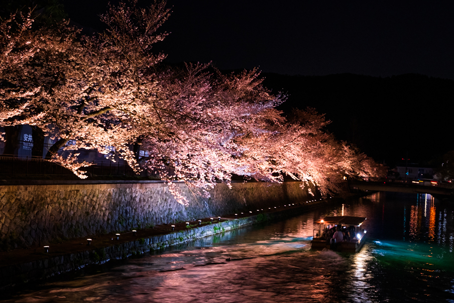 Cherry Blossoms along Okazaki Canal in Kyoto, Japan   Barbara Cameron Pix   Food & Travel Photographer