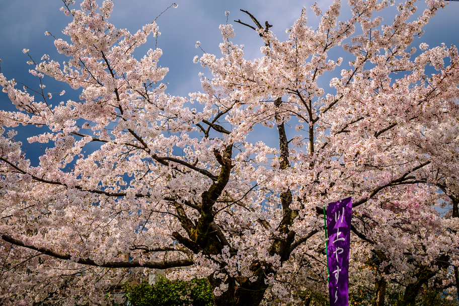 Cherry Blossoms against stormy sky in Kyoto, Japan | Barbara Cameron Pix | Food & Travel Photographer